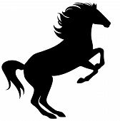 foto of mustang  - ready to jump horse fine black silhouette  - JPG