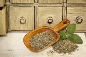 peppermint herbal tea with fresh leaves - a pile and rustic wooden scoop with a primitive apothecary drawer cabinet in background