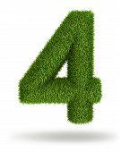 Natural grass number 4