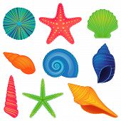 stock photo of shell-fishes  - Vector Collection of Colorful Sea and Ocean Shells - JPG