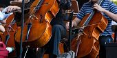 stock photo of double-bass  - View of the Orchestra in concert  - JPG