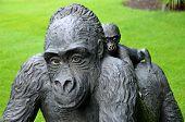 Gorilla with jong