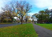 Autumn on Melbourne street