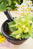 Mortar And Pestle With Linden Flowers, Chamomille And Milfoil, Herbal Medicine