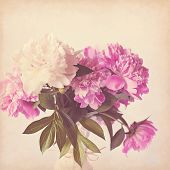 Pink peony vintage background