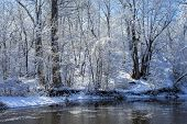 Snow Flocked Trees, Rice Creek