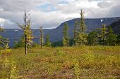 image of taimyr  - The end of the summer on the Putorana plateau - JPG