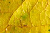 yellow leaf macro, beautiful nature photo