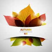 Autumn abstract background with colorful leafs and place for your text