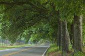 Oak Canopy Highway