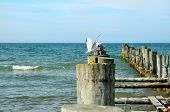 Seagull On Groynes In The Baltic Sea