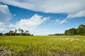 foto of marsh grass  - The vista and expanse of sea grass and pine covered islands of the South Carolina Low Country and coastal area - JPG