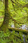 Mossy trees with ferns next to waterway