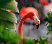 Close Up Shot Of A Flamingo