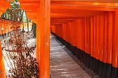 Kyoto - Inari