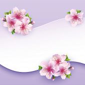 picture of sakura  - Floral background greeting card with flower sakura - JPG