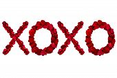 stock photo of xoxo  - Red dried rose petals arranged into xoxo - JPG