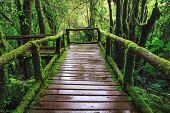 Wet Wooden Trail Birdge Walking Way At Hill Mountain Evergreen Forest Angkalaung Doi Inthanon Chiang