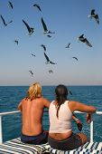 Lovers on a boat and seagulls (focus on the seagulls)