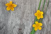 Yellow Flowers And Green Grass On The Old Wood