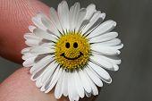 Daisy Smile