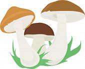 three mushroom