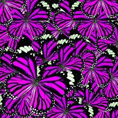 Beautiful Pink Background Texture Made Of Common Tiger Butterflies In Fancy Color And Patterns