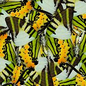 Mix Of Many Fivebar Butterflis In The Same Frame As A Nice Mess Background
