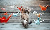 Kitten Is Playing With Paper Cranes