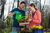 Couple Watering Pansy Flowers