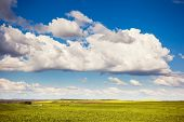 Beautiful sunny day in the field with white fluffy clouds. Overcast sky. Ukraine, Europe. Beauty wor
