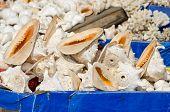 Sea Shell Souvenir Shop In Asia, India