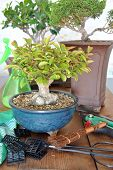 Bonsai With Tools