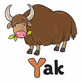Funny Wild Yak, Illustration For Abc. Alphabet Y