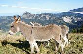 Donkeys on a pasture