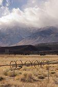 Owen's Valley Sierra Neveda Mountains Livestock Cattle Ranch