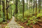 Kumano Kodo at Daimon-zaka, a sacred trail designated as a UNESCO World Heritage site in Nachi, Wakayama, Japan.