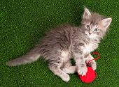Cute grey kitten playing red clew of thread on artificial green grass
