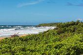 Vegetation on the beach, Kauai