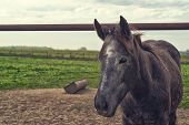 Beautiful Horse On The Farm Ranch