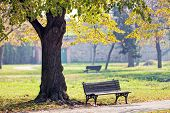image of serbia  - Bench under the tree in the Kalemegdan park Belgrade Serbia - JPG