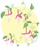 Fuchsia Design