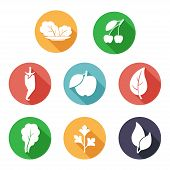 Leaves, fruit and vegetables icons. Flat style