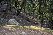 Mountain hiking terrain