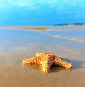 Beach Star Landscape