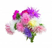 bouquet of asters on a white background