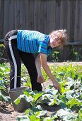 woman molder earth in vegetable patch