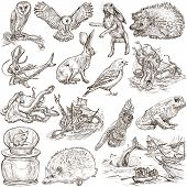 Animals Around The World (set No.9) - Hand Drawn Illustrations