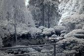 stock photo of portland oregon  - Japanese garden  - JPG