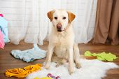image of messy  - Dog in messy room - JPG